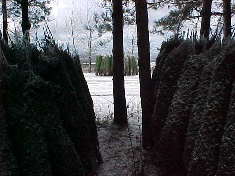 Entrepôts arbres de Noël - Plantations Univert