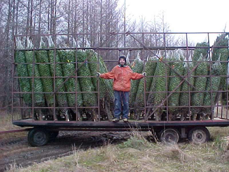 Sapins de Noël transport vers l'entrepôt - Plantations Univert