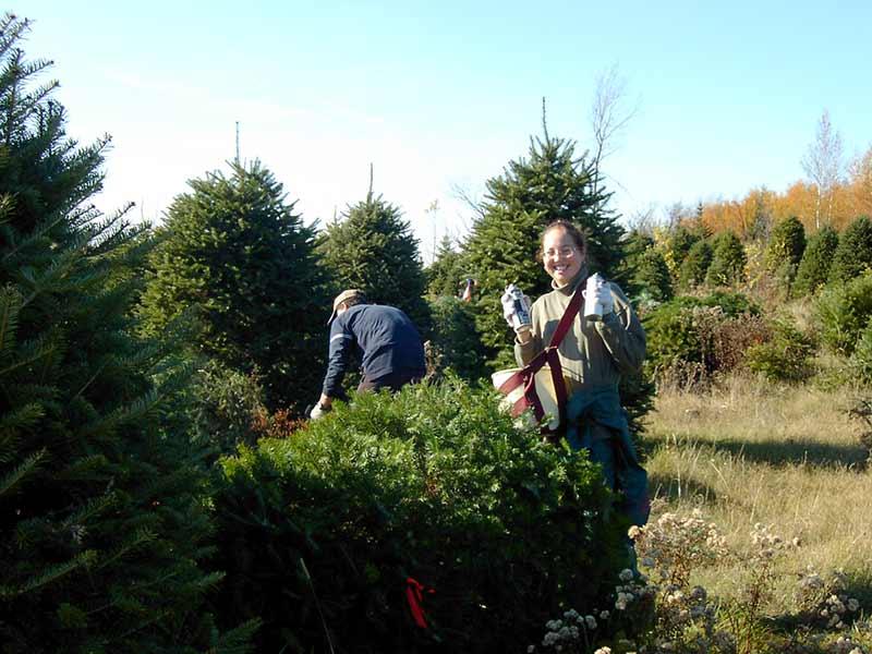 Marquage catégories sapins de Noël - Plantations Univert