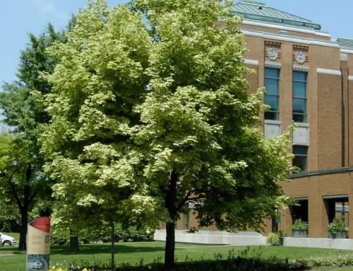 Pour en voir de toutes les couleurs: arbres et arbustes aux feuillages colorés